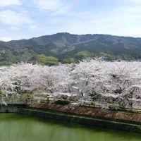 桜の長岳寺、黒塚古墳と猫^^