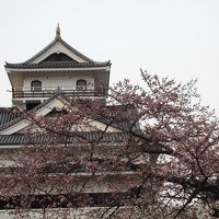 お城と桜 1 上山城