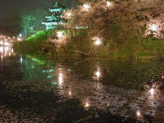 高田城夜桜
