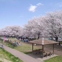 高麗川桜堤でお花見(2014年4月)