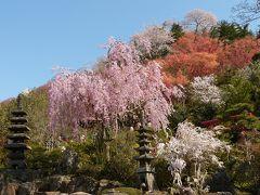 花見山は一昨年とは違う魅力を見せてくれました