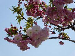 春の横浜ぶらり♪ Vol5(第2日目午前) ☆横浜:アメリカ山公園♪横浜外国人墓地周辺を散策♪