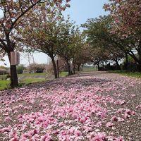 八重桜満開の「竹灯篭宵まつり」と「於大まつり」 2014年春