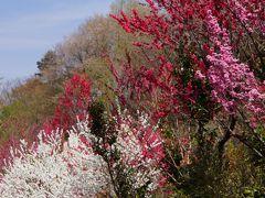 春の花の撮影会。