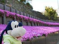 グーちゃん、伊東へ春の花見合宿に行く!(お悔やみのお花見・・・編)