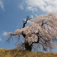しだれ桜の里 信濃境を訪ねて(長野)