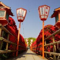 見返り天神さんのキリシマツツジは満開!今年も京都の花巡り 2014年 ①