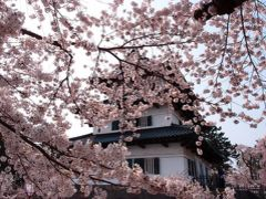 弘前城と桜のコラボしばらくお別れ