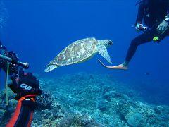 沖縄・慶良間の海を潜る 0・・旅いつまでも・・