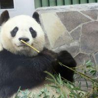 新幹線で行った初・神戸は雨の王子動物園(3)王子動物園での3大ミッション!~レッサーパンダとジャイアントパンダとコアラに会いたい!