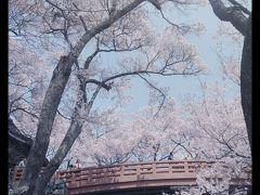 リベンジ高遠コヒガンザクラ2014