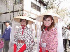 武家屋敷に桜並木そして和服の可愛い娘さん