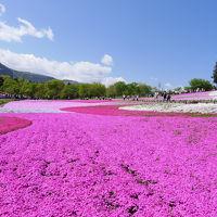 GWの秩父を満喫!羊山公園の芝桜の絨毯そして長瀞ライン下り