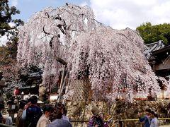 2014.3フィンランドの友人家族と熱海・京都・奈良旅行6-興福寺,氷室神社の素晴らしいしだれ桜