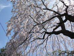 優雅な春の軽井沢・北軽井沢・浅間高原♪ Vol1 ☆旧軽井沢を歩く♪