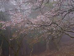雨がそぼふる丹沢へ。