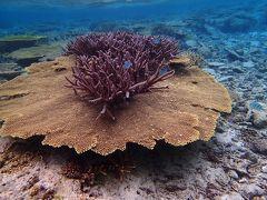 珊瑚礁の島・・宮古島へ・1・【八重干瀬編】