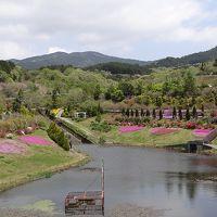 伊豆の国市 大仁瑞泉郷の花まつり