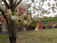 16水曜公園は花盛り