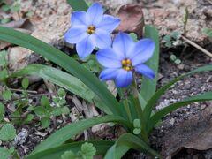 12土曜植えた覚えのない花が咲く