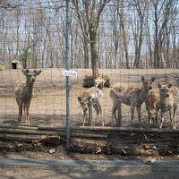 鹿と馬に会った追分町(マイ・ホースを訪ねて・・・)