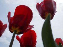 花に囲まれ 歴史に囲まれ 南部富山はいいところ =前編=