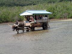 2013年 秋 石垣島(八重山島めぐり観光の旅)