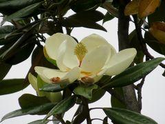 2014春、台湾旅行記9(5):5月6日(5):台中、宝覚寺、泰山木の花、台中で泊まったホテル