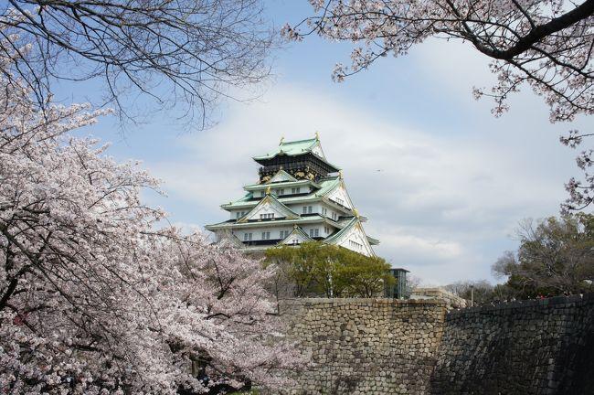 私の持論ですが、日本の歴史の中で文化が爆発した時代は、三つ。それは、天平時代、安土桃山時代、明治時代です。文化は、異質なものと交わることで化学反応を起こすのです。それぞれシルクロードで西洋ともつながっていた国際国家、唐に、大航海時代の幕開けを牽引した南蛮諸国、帝国主義で世界を震撼させた欧米列強と接触することで、日本の文化は大きな影響を受けたのですが、それだけでなく、日本では、なぜかその時代に、もっとも日本らしい、その後の精神の支柱になる文化が生まれたのがとても面白いところ。和辻哲郎もそうした日本人の特性について、古寺巡礼の中で、対象は天平時代ではありますが、しきりに触れています。<br /><br />日本は、島国で鎖国が長かったというのが、今の日本人の常識になっていますが、そればかりではない。徳富蘇峰は、明治維新はなんだったのかを考えるために、一生を費やした人ですが、織豊時代から説き起こさなければ明治維新のなんたるかは分からないとし、『近世日本国民史』を著しました。<br /><br />さて、大阪城は淀君と秀頼が自刃したイメージが強すぎて、ネガティブな見方をされることも少なくないのですが、戦国時代を終わらせ、実質的な天下統一がダイナミックに成し遂げられた象徴。日本各地で領主はけわしい山城から、平野や海に近い平城に出てきて、経済・交通を活性化する街作りが政治の最大目標になる時代が幕を開けました。文化がはっきりと権威の象徴になったことも、信長とその後継者たる秀吉の貢献であり、鎖国になっても、その方向性は変わることはなかったと言えるでしょう。<br /><br />例えば、千利休から小堀遠州、古田織部へ、雪舟から長谷川等伯、狩野派へ。このもっとも日本的と思われているものでも、実は。。小堀遠州の庭園は直線を使った大胆なデザインが特徴と言われますが、これは西洋の庭園手法を学んだもの。織部焼や黄瀬戸の特徴である緑色は東南アジアから伝わったものとも言われ、南蛮文化の影響をしっかり受けているんです。<br /><br />で、話を元に戻すと、大阪城は安土桃山時代の到達点。華やかな日本文化が爆発した時代であったことに、はるか思いをはせれる場所なのです。