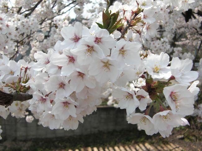 秋田へ春を感じに行ってきました。