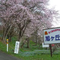 北海道芦別市:桜&道の駅編(2014.5.5 & 5.17)