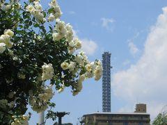 2014春、鶴舞公園の薔薇(1/10):5月16日(1):ジュビレ・デュ・プリンス・モナコ、ゴールド・グロー、トロピカル・シャーベット