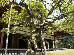 大阪城周辺からいつもの京都市内散策(二日目・完)~桜の時期にちょこちょこ京都市内の隠れスポットを巡ります~