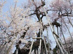置賜・村山からいわきへ四日間(一日目)~置賜さくら回廊は、まさに満開。南下する山形の桜前線にタイミングがぴったり合いました~