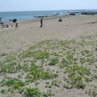 茨城の海辺の花を巡る旅(1)