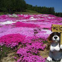 初夏のニセコへ癒されに♪♪ ★双子のサクランボの木★三島さんちの芝桜★神仙沼★