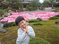 ボタンの花の美しさ
