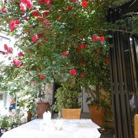 イングリッシュローゼ薔薇館でちょっと贅沢な時間・・・・・薔薇に囲まれてモーニング♪