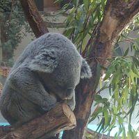泊まりで行くサンリオピューロランド&多摩動物公園(多摩動物公園編)
