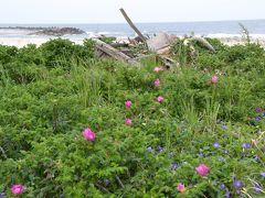 茨城の海辺の花を巡る旅(2)