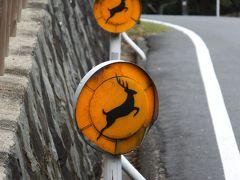 奈良 東大寺 鹿に会いに行く