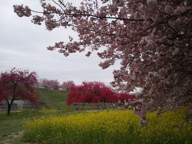表紙は千曲川河川公園です。<br />須坂市、小川村へ花見に行きました。