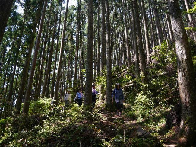熊野古道のメインルート中辺路を歩くオフ本番。<br />中辺路は滝尻王子から熊野本宮、さらに新宮、那智大社に至る長大な道です。<br />オフ会ではもちろん全部歩くわけでなく、途中の小広峠から三越峠を経て、船玉神社から赤木越で湯の峰温泉までの15kmほど。<br />ほとんど山道です。標高は500Mほどですがアップダウンの連続で、高尾山3回分か4回分歩いた気分でした。<br /><br />普段から一緒に歩いているメンバーがほとんどですが、山道の15kmはどうなることかと思っていました。<br />難儀はしたけど全員無事にゴールできました。コースタイムはオーバーしましたが(^^;<br /><br />登りは写真を撮る余裕がなく下りの写真ばかりでした。<br />なかなかあの険しさを写真で表現できませんね。<br /><br /><br /><br /><br /><br /><br /><br />