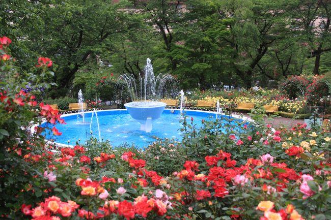 「青森まで、入梅りしました」と昨日天気予報で言ってましたので、<br /><br />計画していた『花巻温泉バラ園』に早く行かないとまた花が終わってしまう。<br />ということで、予定を早めて行って来ました。<br /><br />去年が、入梅りが遅かったような感じなのでのんびりしてましたら、<br />今年は、3日から一週間ほど早い見たいです。<br />あげくに、梅雨が長引きそうなので。。。。<br /><br />6月まで高速道路・・土日半額・・を利用して<br />バラ園7日まで500円<br /><br />ということで、早速車を走らせで。。。花巻へ。。