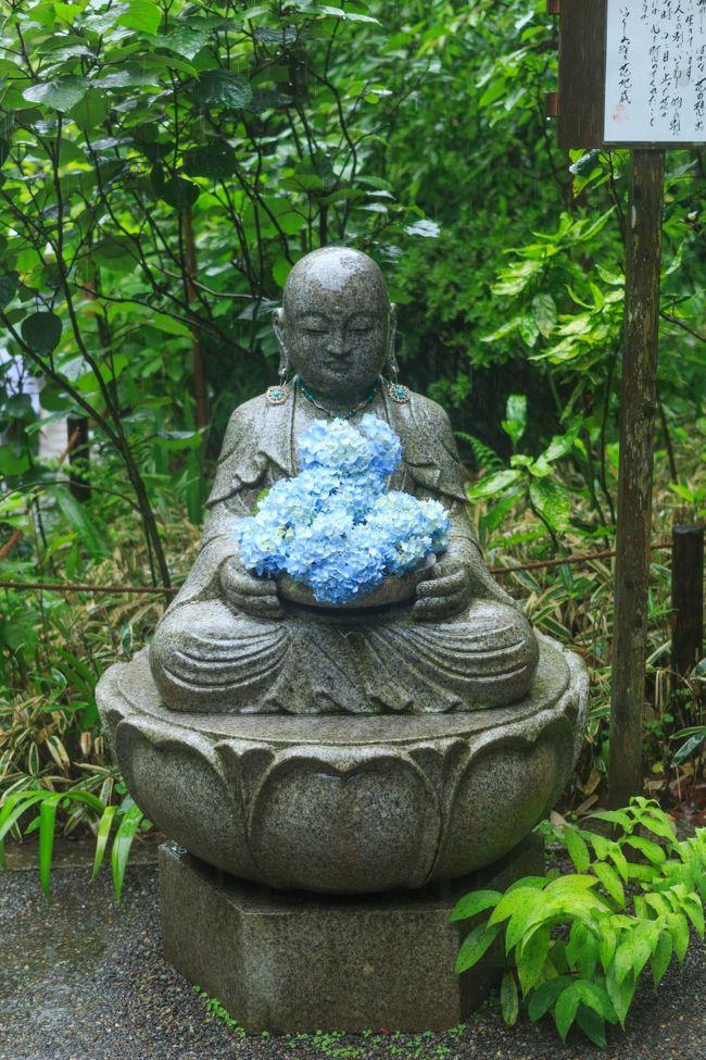 雨の日の明月院(紫陽花)