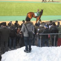 2014 大雪で代替開催となった東京競馬場へすんごく久しぶりに行ってみました!