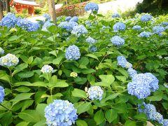 三室戸寺の紫陽花と宇治の薬膳料理を楽しんできました!