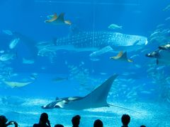 BSで放送されたフォレンダム号9日間のクルーズ 6日目後半 沖縄美ら海水族館と古宇利大橋