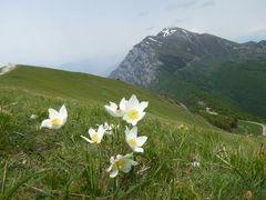 初夏の優雅な北イタリア旅行♪ Vol87(第6日目午後) ☆マルチェジーネ(Malcesine):バルド山(Monte Baldo)のBocca di Naveneから素晴らしい眺望を楽しむ♪