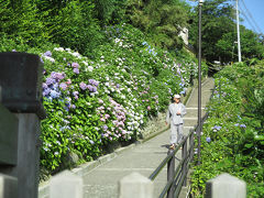 成就院 長谷寺 光則寺 鶴岡八幡宮[2014/06/15(日)]
